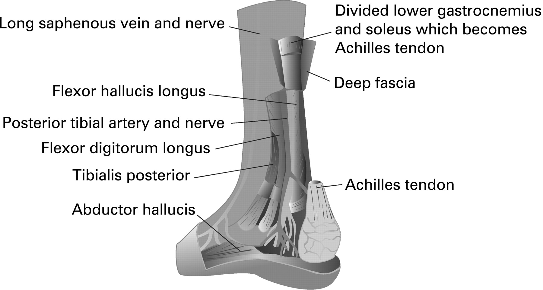 Soft tissue injury commissioned series: 6 Lower leg, ankle and foot