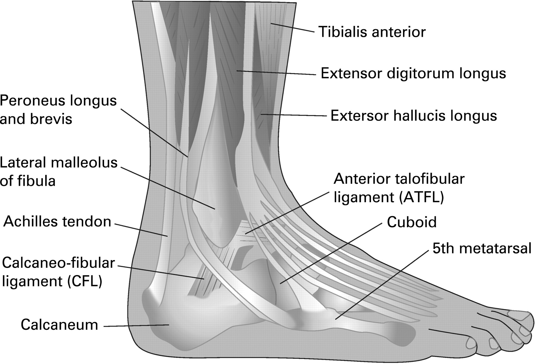 Soft Tissue Injury Commissioned Series 6 Lower Leg Ankle And Foot