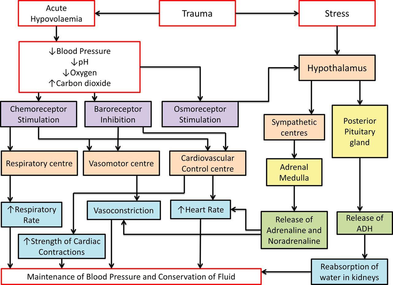 Hypothermia in trauma | Emergency Medicine Journal