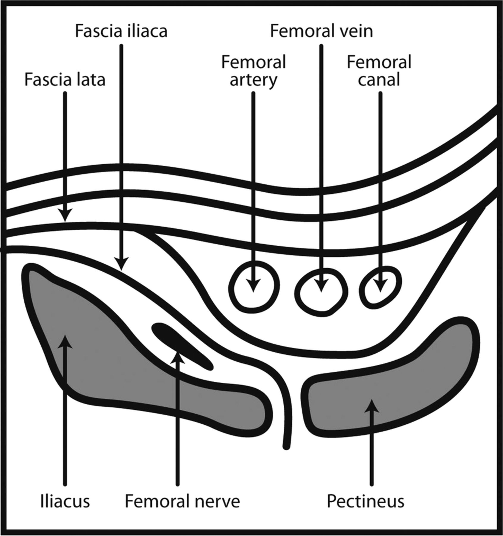 femoral nerve blocks in fractures of femur: variation in the, Muscles